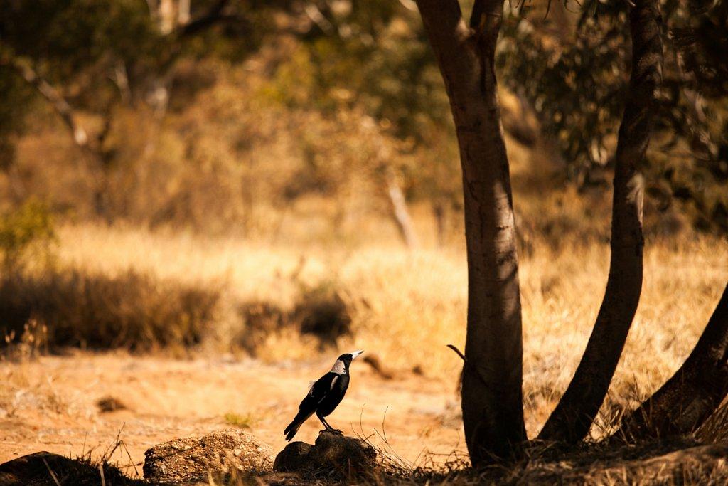 Australia : The Outback